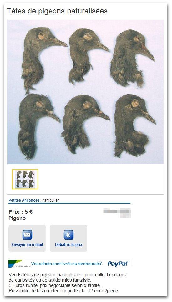 Têtes de pigeons pour porte-clés