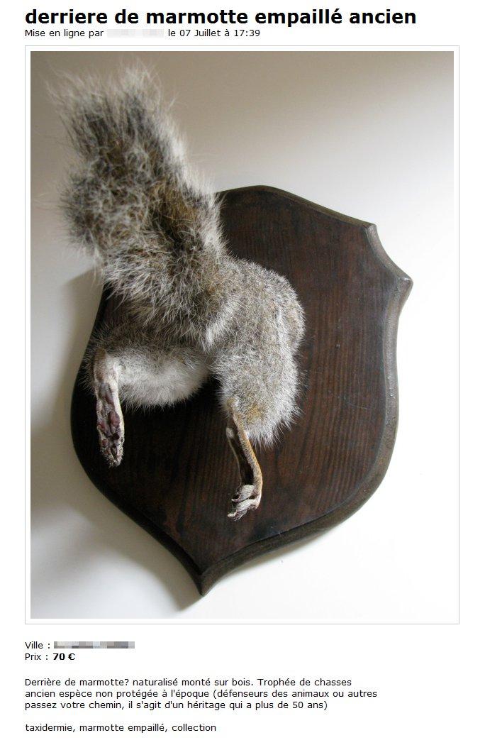 Cul de marmotte empaillé