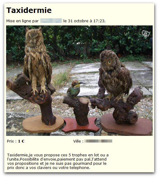 Florilège de taxidermies raffinées