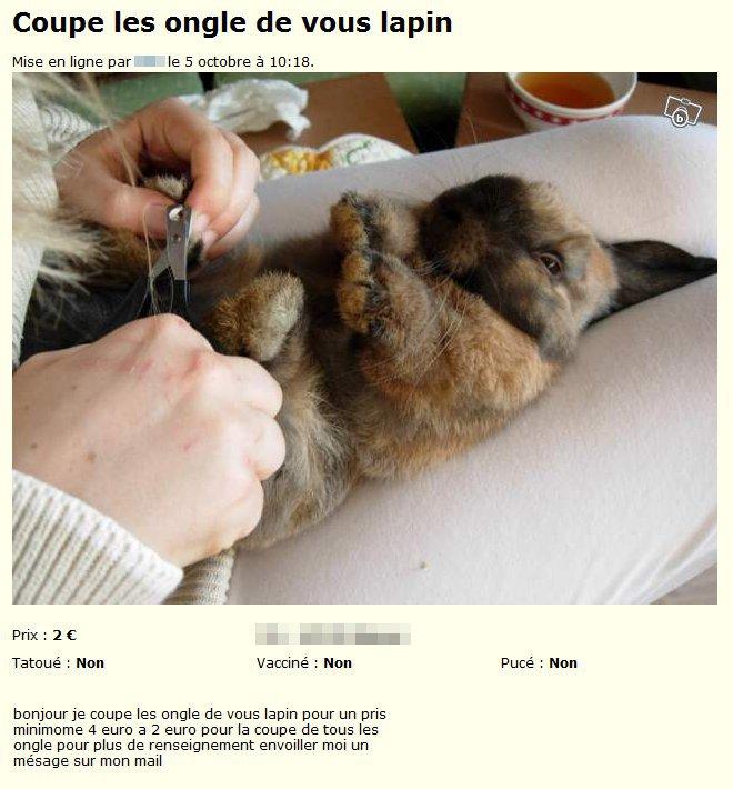 Manucure et pédicure pour lapins