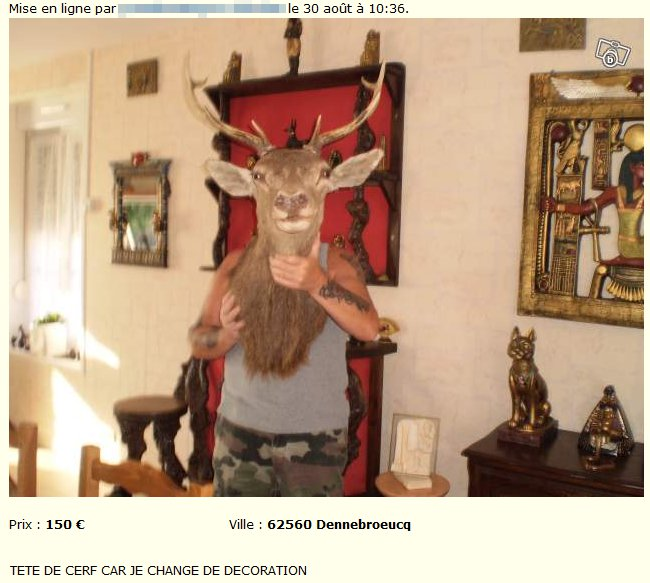 Taxidermie tête de cerf